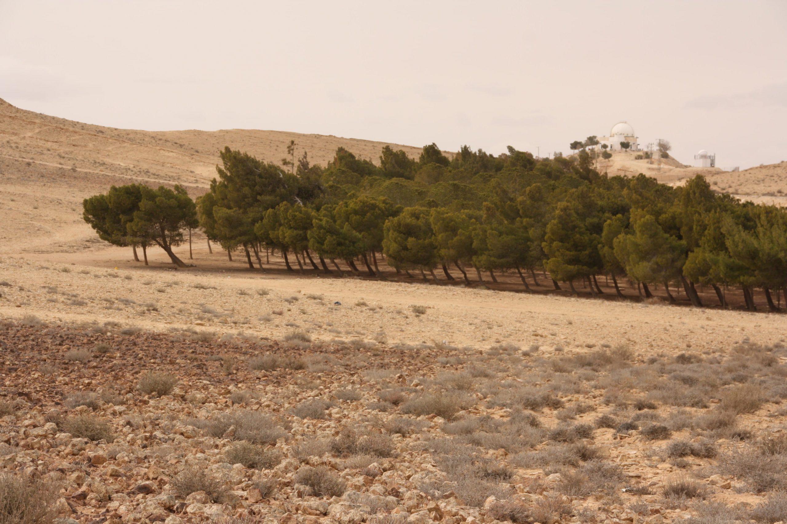 יער בכיוון הרוח על שפת המכתש מצפון