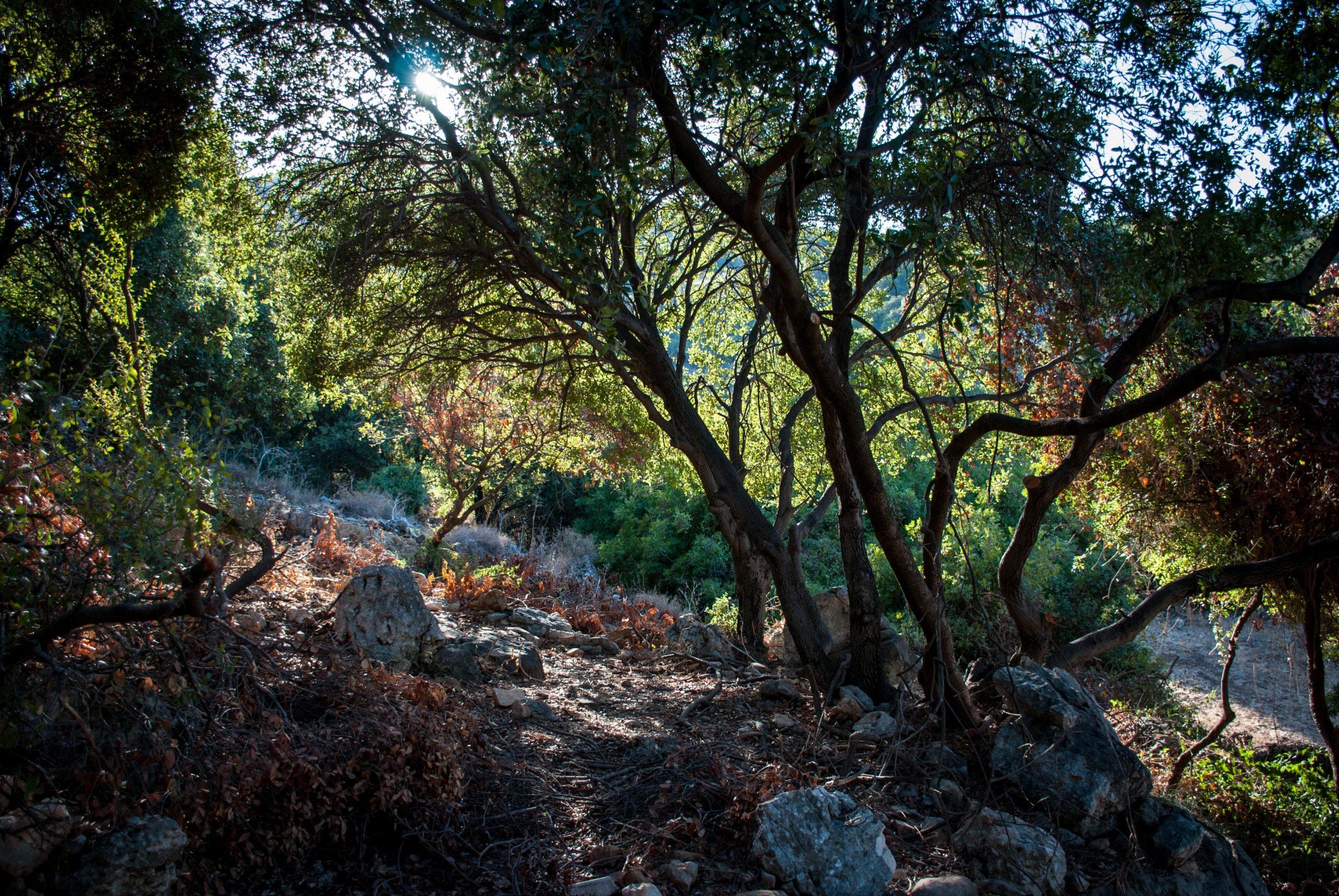 יער מהאגדות בנחל צבעון