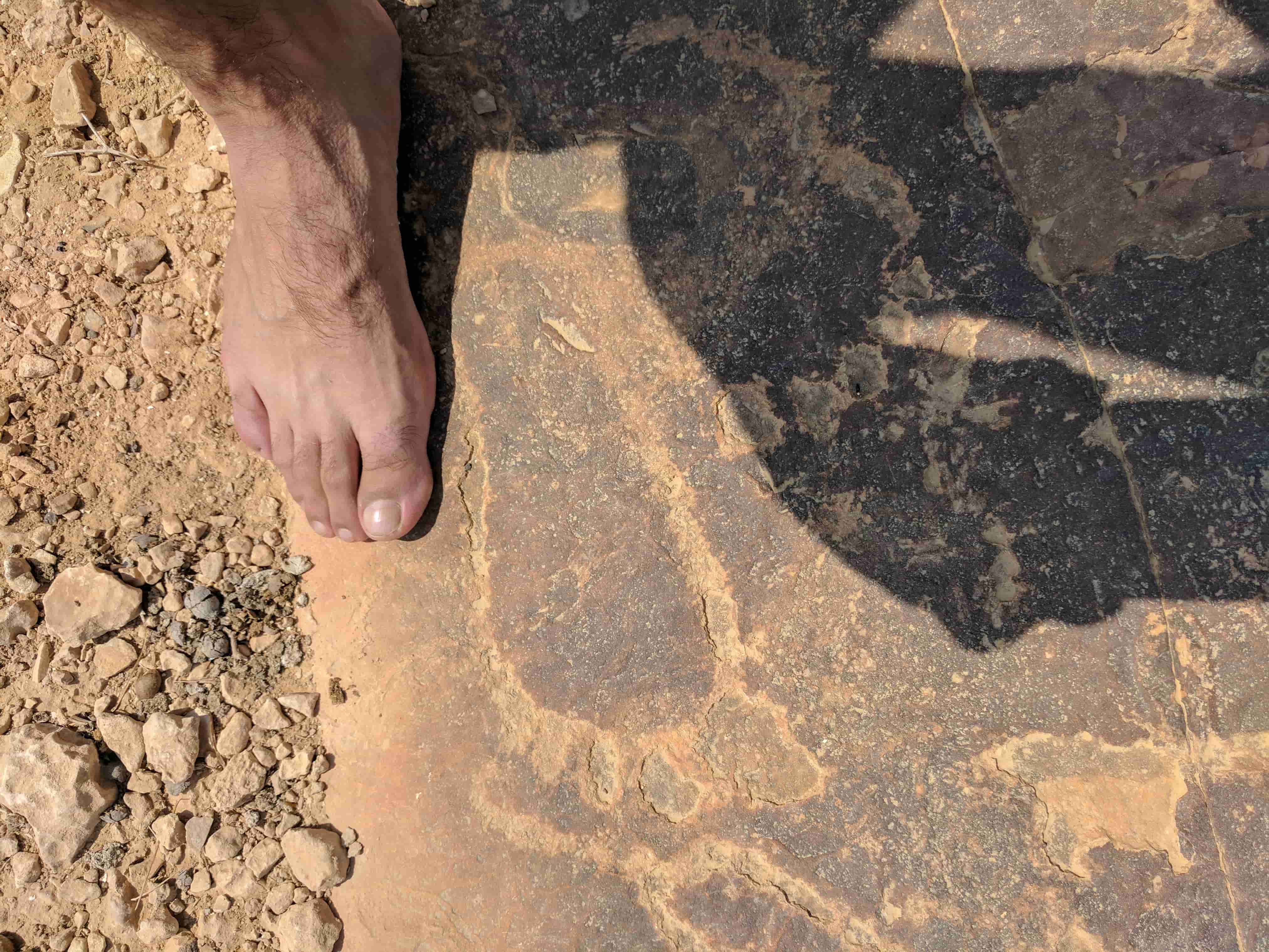 ציורי סלע הר ערקוב