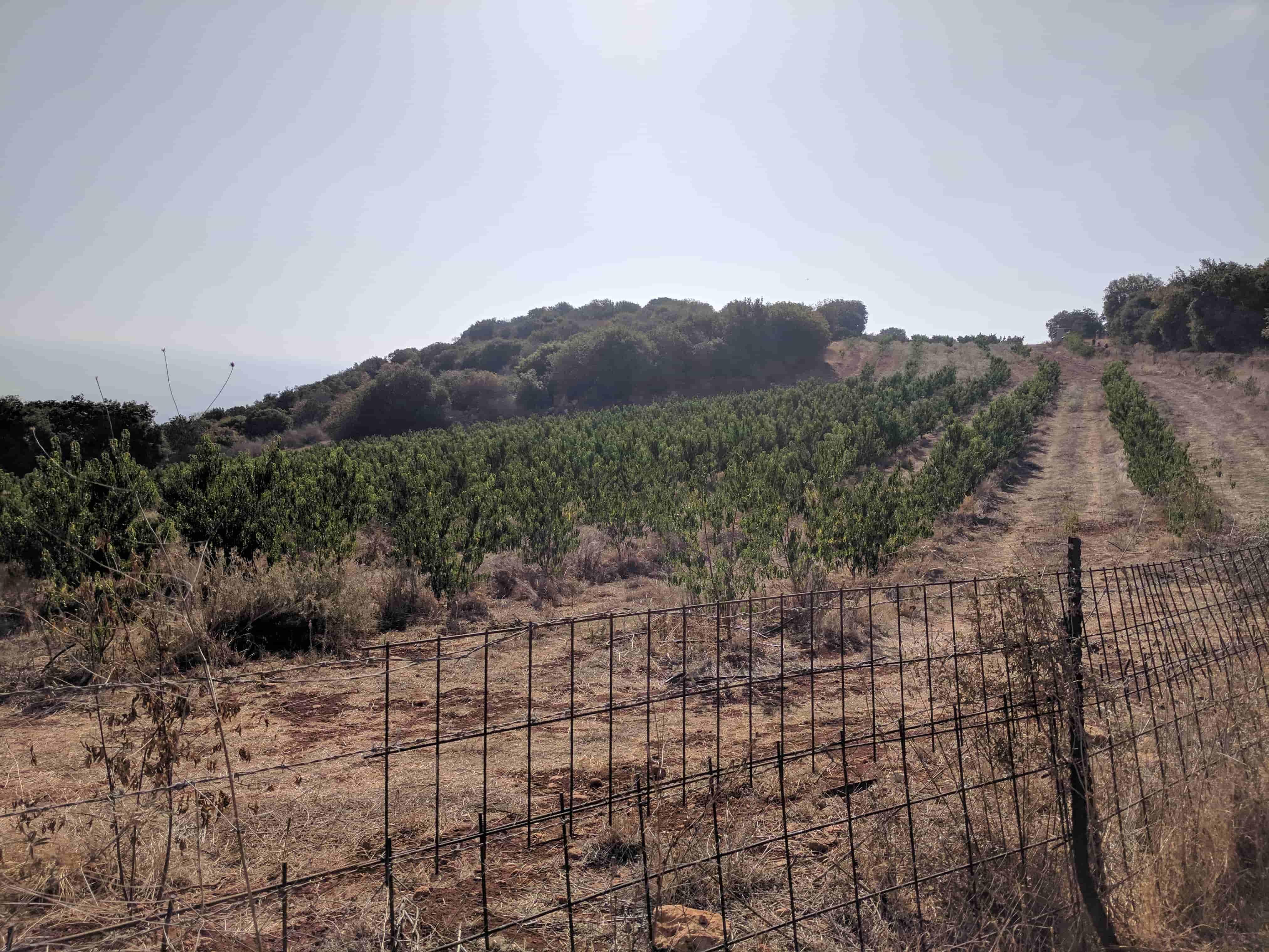 מטע יבש שביל ישראל
